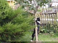 Нажмите на изображение для увеличения Название: кот.jpg Просмотров: 241 Размер:461.2 Кб ID:10181