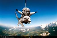 Нажмите на изображение для увеличения Название: maverick_meerkats_02.jpg Просмотров: 96 Размер:142.2 Кб ID:10800