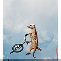 Нажмите на изображение для увеличения Название: maverick_meerkats_03.jpg Просмотров: 87 Размер:144.7 Кб ID:10801