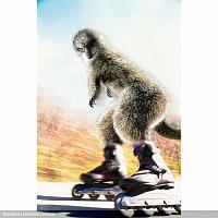 Нажмите на изображение для увеличения Название: maverick_meerkats_05.jpg Просмотров: 89 Размер:193.8 Кб ID:10803
