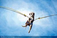 Нажмите на изображение для увеличения Название: maverick_meerkats_06.jpg Просмотров: 80 Размер:120.3 Кб ID:10804