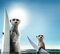 Нажмите на изображение для увеличения Название: maverick_meerkats_07.jpg Просмотров: 85 Размер:157.7 Кб ID:10805