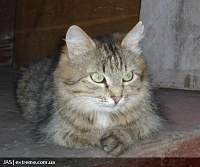 Нажмите на изображение для увеличения Название: cat77_n_.jpg Просмотров: 153 Размер:100.7 Кб ID:15898