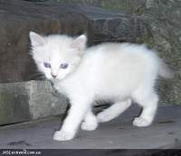 Нажмите на изображение для увеличения Название: cat93_n.jpg Просмотров: 152 Размер:139.4 Кб ID:15899