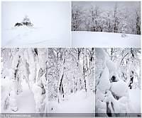Нажмите на изображение для увеличения Название: Волшебный лес_мал.jpg Просмотров: 214 Размер:320.9 Кб ID:17580