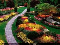 Нажмите на изображение для увеличения Название: квіти.jpg Просмотров: 85 Размер:294.5 Кб ID:1857