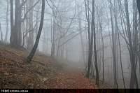 Нажмите на изображение для увеличения Название: туман.jpg Просмотров: 124 Размер:188.8 Кб ID:19874
