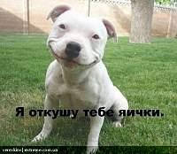 ������� �� ����������� ��� ���������� ��������: image.jpg ����������: 151 ������:146.9 �� ID:20954