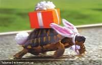 Нажмите на изображение для увеличения Название: черепаха к ДР.jpg Просмотров: 35 Размер:83.4 Кб ID:20955