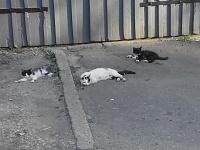 Нажмите на изображение для увеличения Название: коты 38.jpg Просмотров: 65 Размер:290.1 Кб ID:22304