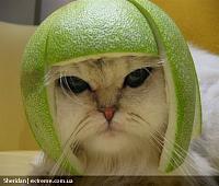Нажмите на изображение для увеличения Название: cat%20helmet.jpg Просмотров: 667 Размер:99.8 Кб ID:3305
