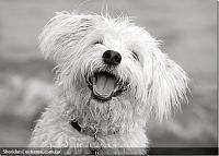 ������� �� ����������� ��� ���������� ��������: toydog_5.jpg ����������: 87 ������:141.5 �� ID:8357