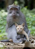Нажмите на изображение для увеличения Название: ss-100826-monkey-kitten-02_ss_full.jpg Просмотров: 103 Размер:237.2 Кб ID:9491