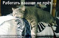 ������� �� ����������� ��� ���������� ��������: cathumour094.jpg ����������: 68 ������:82.9 �� ID:9545